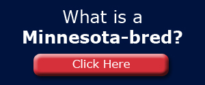 What is a Minnesota bred?